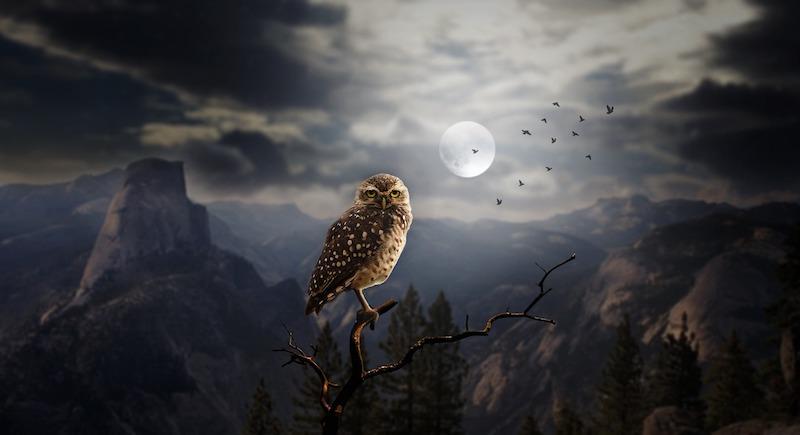 halloween 2018 owl