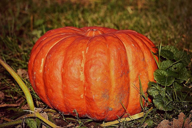 halloween 2018 pumpkin